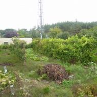 Predaj 4i RD s veľkou záhradou v meste Malacky.